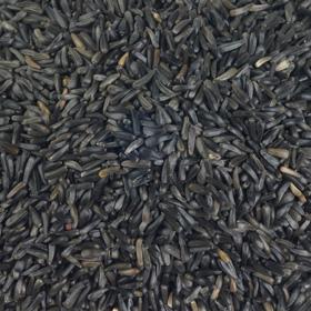 Vine House Farm Nyger Seed