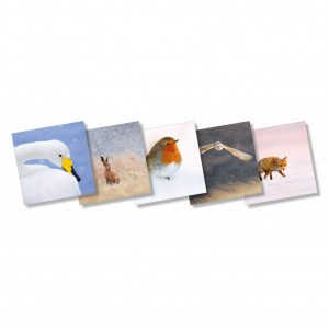 Wildlife Trust Mixed Christmas Cards